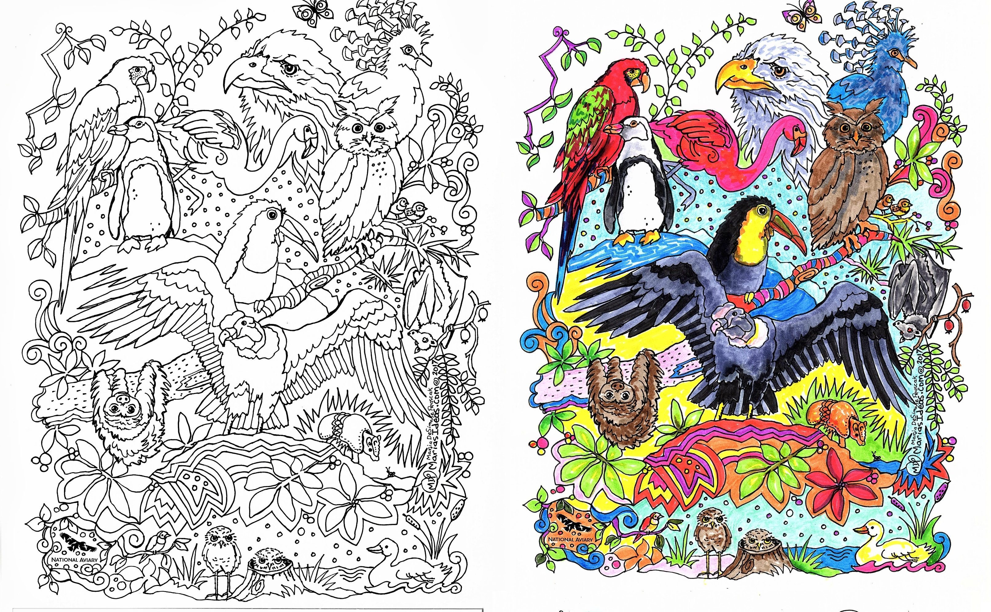 sloth coloring page, bird art, national aviary, marias ideas